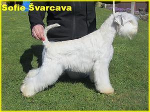 SOFIE Švarcava