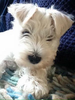Puppy Evie