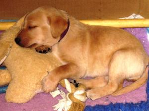 Pup 5 weeks old