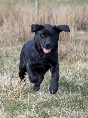 A previous Tiggy puppy