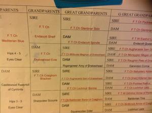 tested, Sd2, EIC, PRA, CNM, hips5/4 elbows 0
