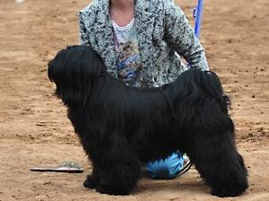 Khyi taking Best of Breed