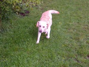 Pepper on her morning walk