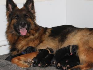 Reva & her babies