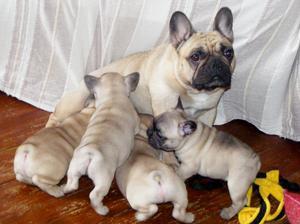 Vera & her puppies