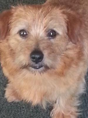 'Teddy' Bowanne Teddy Bear