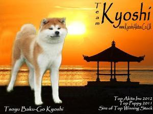 Tsoyu Baku-Go Kyoshi (Fuzzy)