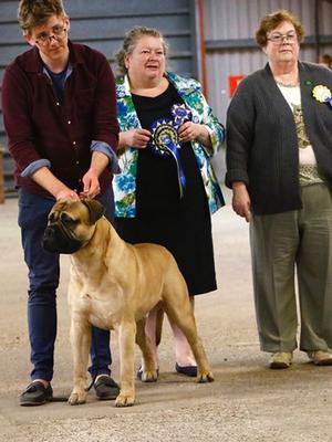 Noah winning Best in Show at Retford Canine Societ