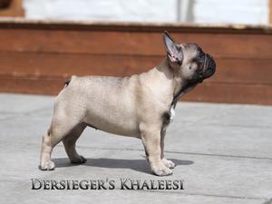 Dersieger's Khaleesi