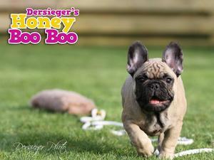 Dersieger's Honey Boo Boo