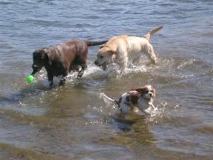 Jade & Abbie with their friend Jaz enjoying a swim