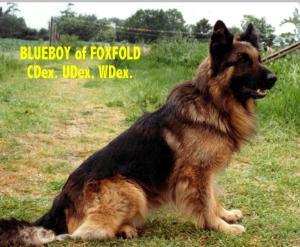 Blueboy of Foxfold CDex.UDex.WDex.