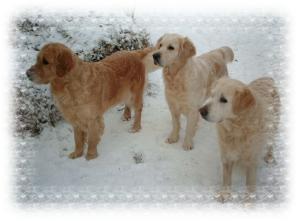 Alice, April & Ellie in the snow