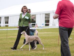Vanessa with Jack winning Best Puppy at Bath 2009