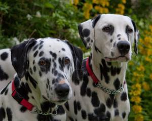 Millie and Cesc