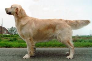 Suntide Magnolia (Maggie) - Mum of the pups