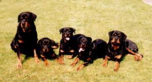 Rottwud '97 - Bosan, Rikki, Tessa, Meisha, Connor