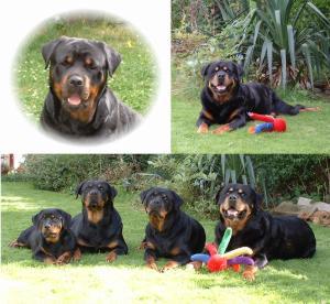 Jodie, Connor, 'Cuba, Rikki, Jodie, Connor- 04'