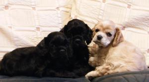 Pups at 5 weeks old
