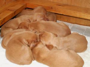 pups at 1 week