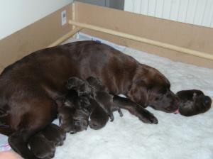 Zimba with her newborn puppies