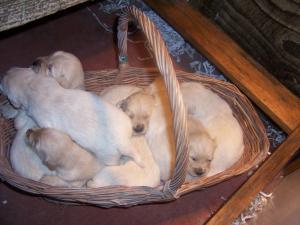 Basket of mischief