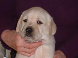 Puppy boy face