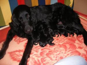 Kesi with pups 2