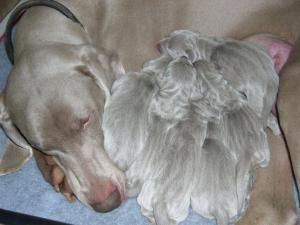 Maisie's Puppies