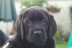 Close up of pups