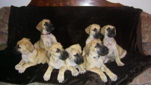 pups at 7 weeks
