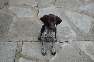 pup 9 weeks