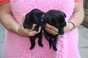 1week old 2 boys