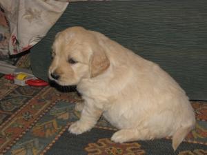 Jade's puppy
