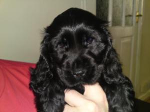 Pup at 7 weeks