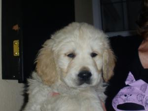Big  boy puppy !!