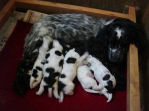 Mum with pups