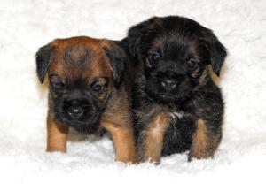 Baileys new puppies