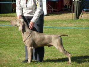 Axel (Darlington 09)