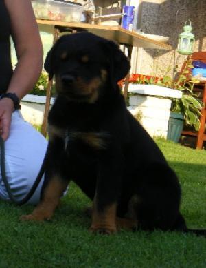 pup at 10 weeks