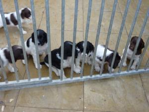 pups 6 weeks
