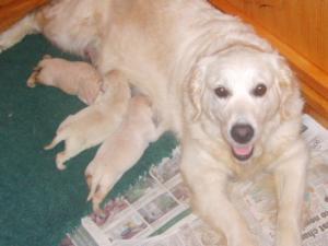Tekka with her last 'Monty' litter
