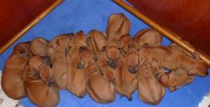 pups at 3 5 weeks old ...