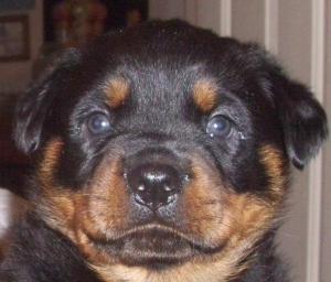 pup 5 week old