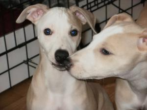 pups 9 weeks old