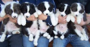 pups age 7 weeks