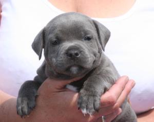 silver blue boy