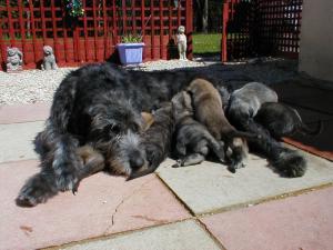 Enya and pups at 4 weeks