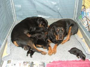 3 generations: Grannma Rikki, Mum Cuba & puppies!
