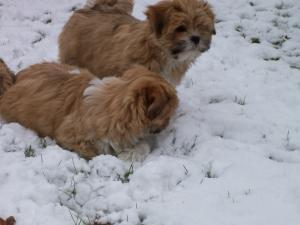 Pups at 10 weeks enjoying the snow